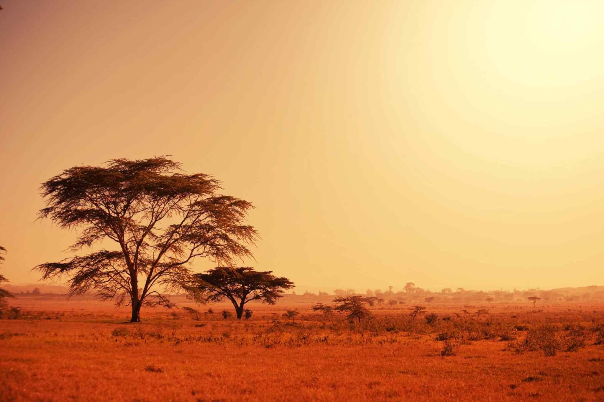 https://ecotours-senegal.com/wp-content/uploads/2018/09/tour-africa-02.jpg